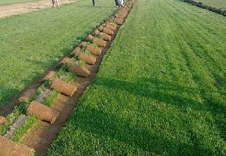 冬季怎么让草坪变绿?冬季保持草坪绿色的方法
