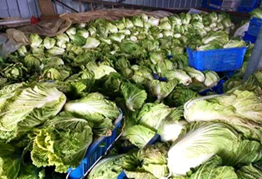 河南信阳菜农蔬菜滞销 获社会爱心人士帮助