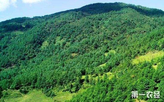 国家林草局发布林业行业标准,部署春节两会期间林业安全生产