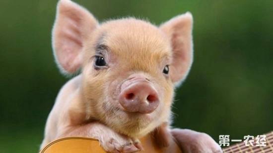 北方猪价有回暖迹象,或将小幅上涨