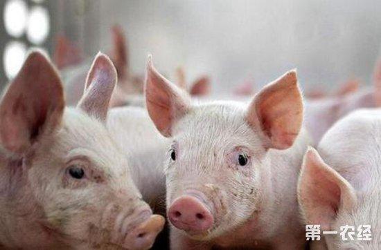 生猪市场不景气,互联网企业分食