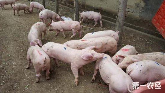 养猪场要如何预防火灾?养猪场火灾的预防措施