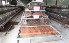 处理养殖场中禽畜粪便的方法