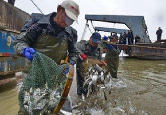 安徽天长市委保护水产资源 已于本月1日开始全面实行封湖禁渔