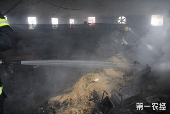 湖北钟祥:几千只鸡在一场大火中消亡