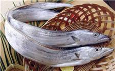 哪些常见的鱼是无法人工养殖的?为什么?