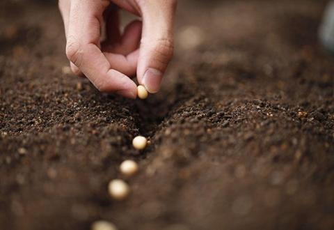 福建宁德为壮大种子企业 加快推进现代农作物种业发展