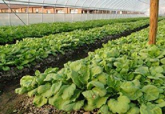 我国将实现小农户与现代农业发展的结合 从而实现乡村振兴