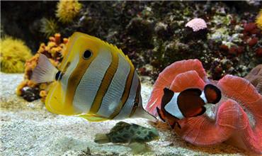 养殖热带鱼如何安全过冬?热带鱼过冬技巧