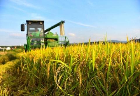 2018年湖北水稻机收率达到98.8% 有效推进全程机械化示范县进程
