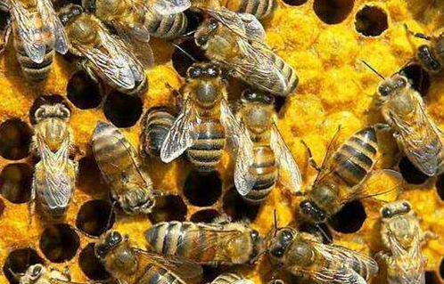 小小的蜜蜂给他带来了甜蜜收益