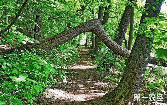 我国林业产业规模不断扩大 2018年总产值达7.33万亿元