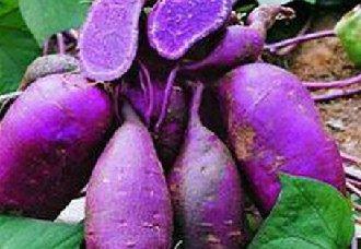 紫薯线虫病要怎么治?紫薯线虫病的防治措施