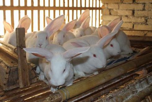 返乡创业开启养兔,如今成了致富带头人