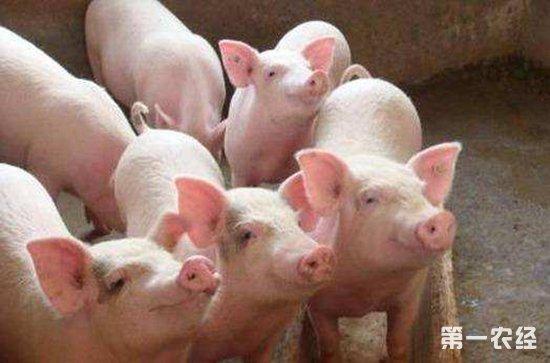 春节前猪价:供给充足,消费难以提振