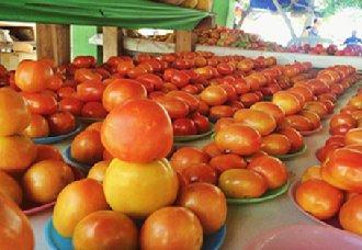 <b>保加利亚蔬菜市场的供应基本依赖进口</b>