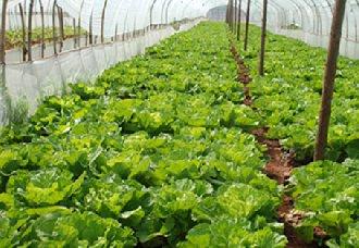 <b>沈阳大力推进蔬菜生产建设 将在三年左右打造百万亩中国北方蔬菜基地</b>