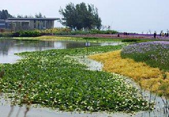 <b>宁夏银川为加强湿地生态保护修复 力争年内实现湿地保护率达85%以上</b>