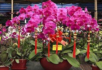 <b>北京:将有上千万盆年宵花投放市场 满足市民的市场需求</b>
