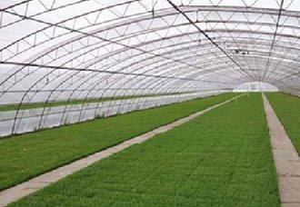 沈阳:为实现乡村振兴 大力推进现代农业转型升级