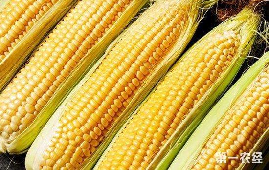 """回顾2018年,玉米市场价格呈""""M""""走势"""