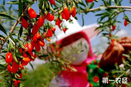 2018年青海省林业产值达到65.21亿元