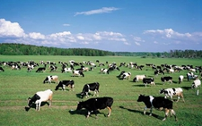 内蒙古积极培育牧区新型经营主体 建设性畜牧业居全国领先水平