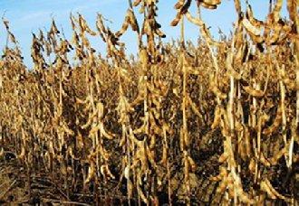 <b>我国2019年大豆种植补贴政策或将继续实行增加</b>