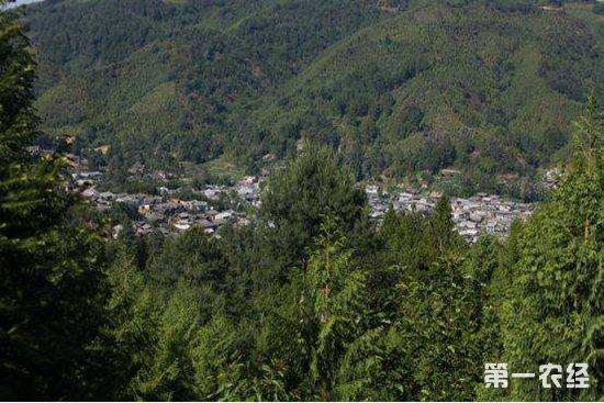 云南腾冲发展林业产业,全力打造绿水青山