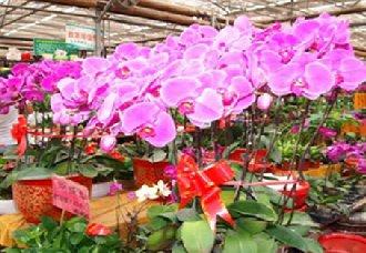 年关将至 河南商丘花卉市场销售量暴增
