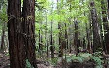 澳大利亚未来10年计划投资2000万澳元种树10亿棵