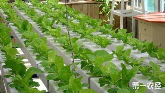 河南出台意见进一步完善质量认证体系 打造精品农产品
