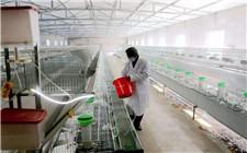 如何减少夏季养殖场爆发疾病的可能?夏季养殖场防疫措施