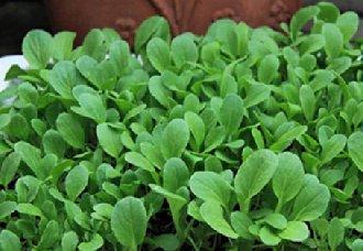 广西天峨县无公害蔬菜种植面积达800亩
