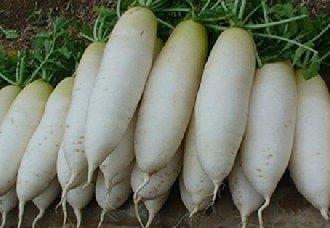 <b>5万公斤贵州毕节白萝卜将正式进军迪拜 打开国际市场</b>