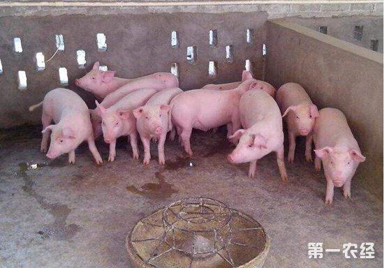 2019年下半年猪价会大涨?预测依据是什么?