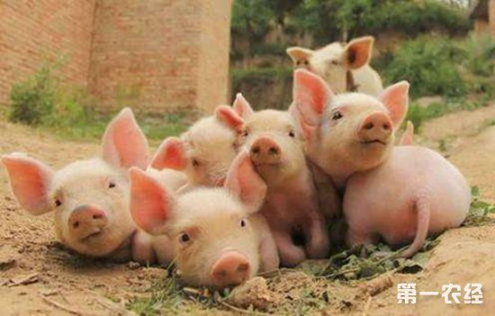 非洲猪瘟:五分之四疫区解除封锁,做好打持久战准备