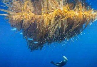 <b>美国加利福尼亚海湾发现22种新型微生物</b>