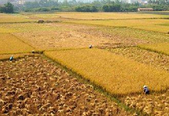 辽宁铁岭将开展粮食绿色丰产增效试验 推动农业发展