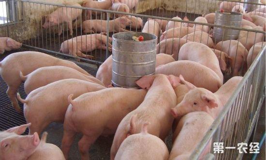 回顾2018生猪市场,展望2019生猪行情