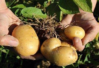 湖北再出新举措 打响农产品品牌