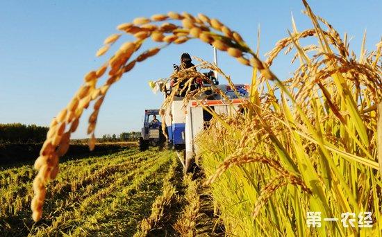 2019年国内粮食价格行情走势预测