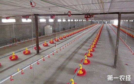 养鸡技术:饮水免疫的操作方法和注意事项