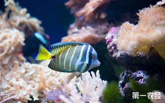 鱼缸循环不下水小白求指导 福州观赏鱼 福州龙鱼第2张