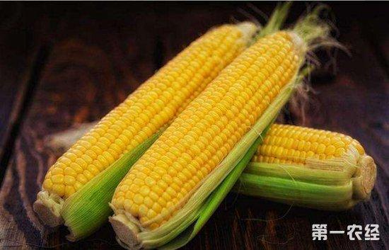 """玉米市场迎来""""三大利好"""" 2019年玉米价格表现或更亮眼"""