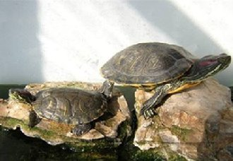 <b>乌龟要怎么养?3个乌龟的养殖方法介绍</b>