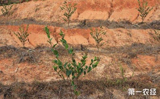 2019年种树有补贴吗?一亩补贴多少呢?