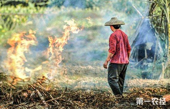 全国各地农村禁止焚烧秸秆 农民:你拉走我不收钱!