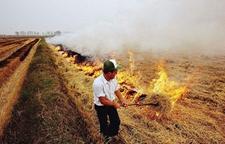 全国各地农村禁止焚烧秸秆,农民却频频顶风违纪,为何?