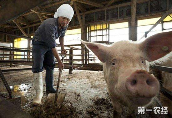 遭遇非洲猪瘟后的养猪场粪污怎么处理?
